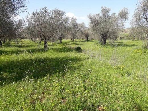 Land in Btourram - ارض للبيع بطرام الكوره