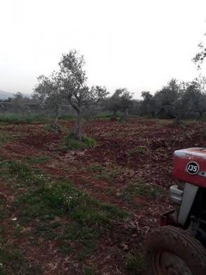 Land in Btourram - ارض للبيع في الكورة منطقة بطرام زراعية