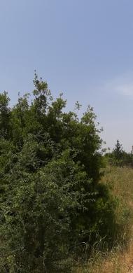 Land in Abadiyeh - ارض للبيع في ضهور العبادية