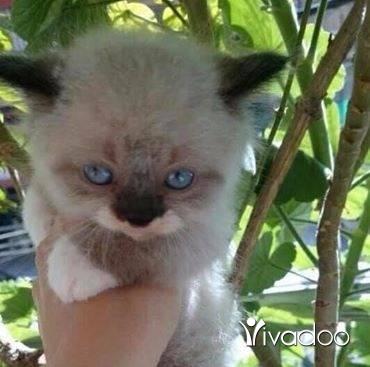 قطط في طرابلس - cat
