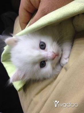 قطط في طرابلس - cats