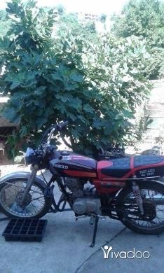 Barossa in Akkar el-Atika - موتير بحاله جيده جدا السعر 400الف موجود في بيت ايوب عكار