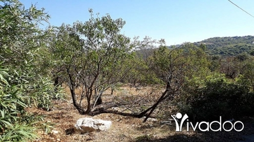 Land in Amchit - Land for Sale Ain Kfaa Jbeil Area 1210Sqm Zone 25-50% h9+1met