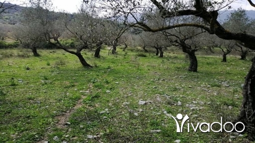Land in Bejje - Land for Sale Bejjeh Jbeil Area 680Sqm Zone ( Z ) 5% h3.5 met