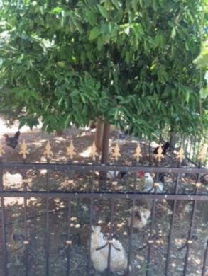 Land in Damour - أرض للبيع مميزه السعديات