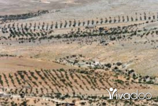 Land in Tfayel - أراضي للبيع بسعر مغري