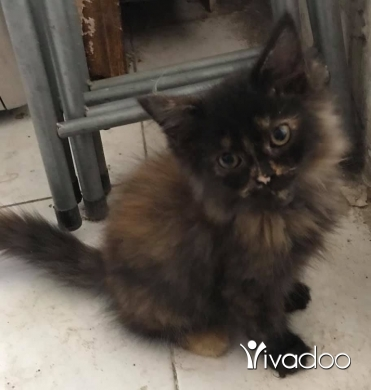 Cats in Tripoli - cat