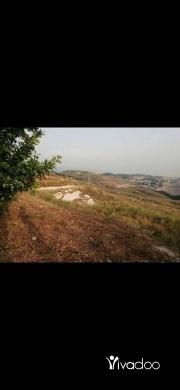 Land in Saida - أرض للبيع شرق صيدا