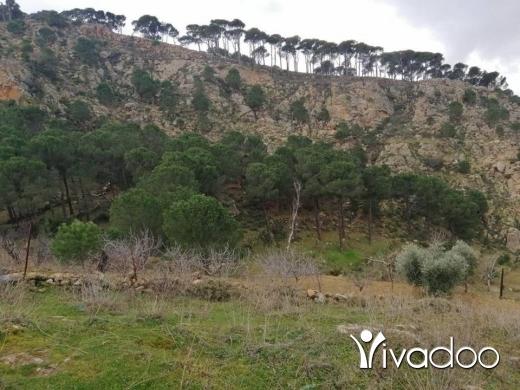 Land in Hasbaya - أرض للبيع بسعر مغري
