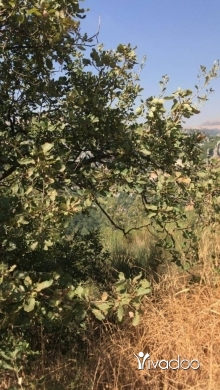 Land in Kfar Zebian - A 11000 m2 land having an panoramic mountain view for sale in kfarzebian