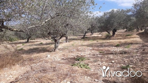 Land in Amchit - Land for Sale Ain Kfaa Jbeil Area 1331Sqm
