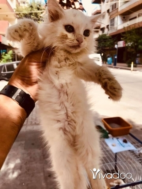 Cats in Port of Beirut - cats