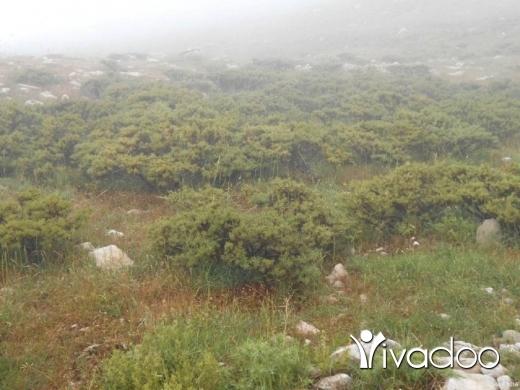 Land in Zaarour -  HOT DEAL - A 30,000 m2 land for sale in Zaarour