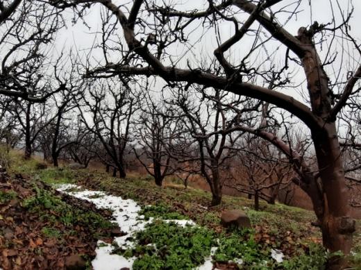 Land in Kfar Zebian - Land for sale in kfardebian 4995 sqm
