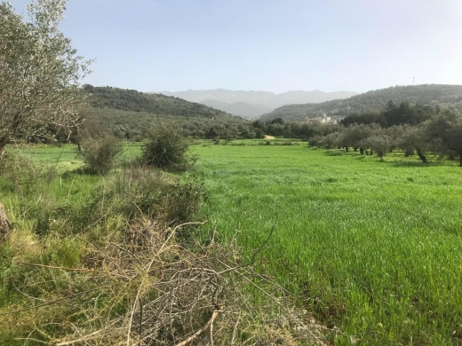 Land in Akkar - Land 8,694 sqm, for Sale in Bayno, Akkar