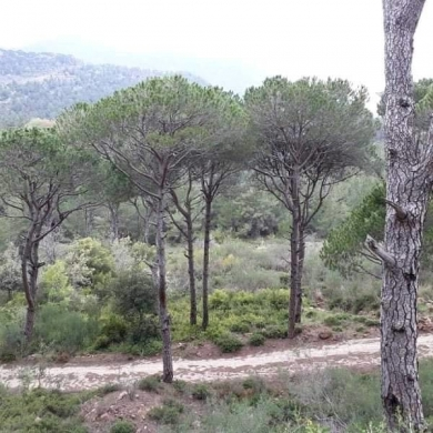 Land in Jezzine - Five Lands for sale in Jezzine, South Leb.