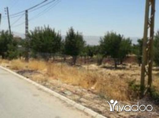 Land in Zahleh - ارض 2500 متر في بدنايل وسط البقاع بقيمة 250 الف دولار لبيع 165000 دولار زحلة ، البقاع: Great Bargain