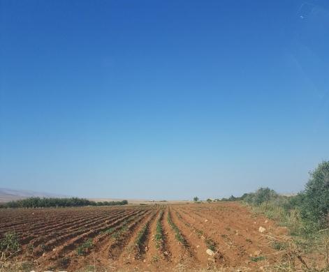 Land in Baalback - 50000 متر اراض في رأس بعلبك