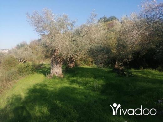 Land in Saida - أرض للبيع زيتون