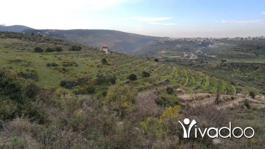 Land in Bziza - Land for Sale Bziza Koura Area 11000Sqm