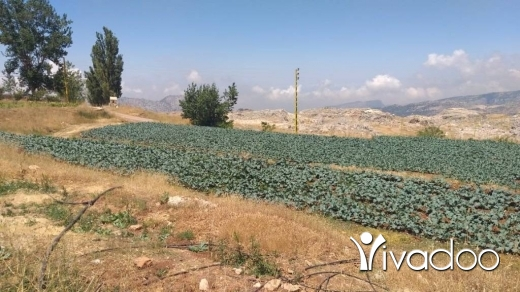 Land in Laqlouq - L07503 - Beautiful Land for Sale in Laqlouq