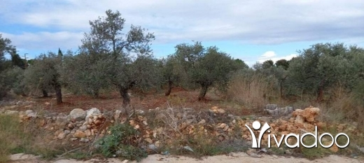 Land in Tripoli - ارض للبيع