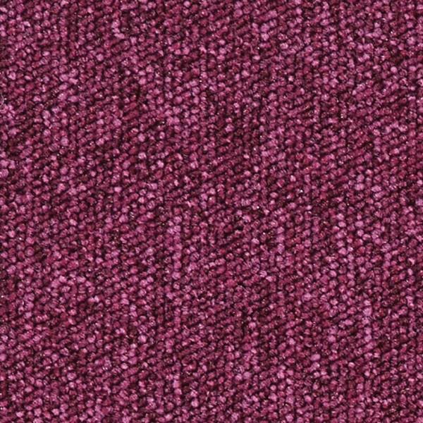 672726 Fuchsia (PD)