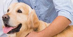 Pedigree® Einen guten Tierarzt finden