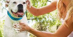 Pedigree® Ihren Hund oder Welpen pflegen