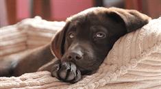 Pedigree® So geht's: Hundebett selber machen!