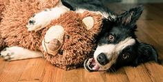 Pedigree® Von Hundespielzeug bis Halsband: Geschenkideen für Hunde & Hundebesitzer