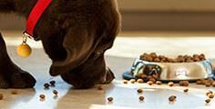 Pedigree® Von Welpen zum Adult Hundefutter wechseln