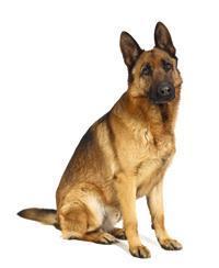 Pedigree® Deutscher Schaferhund