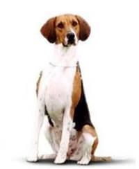 Pedigree® Foxhound