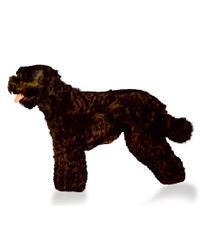 Pedigree® Schwarzer Terrier