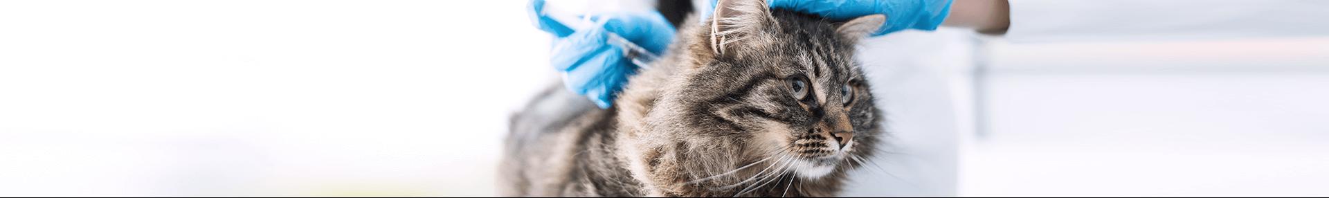 Katzen Impfen Lassen Das Sollten Sie Wissen