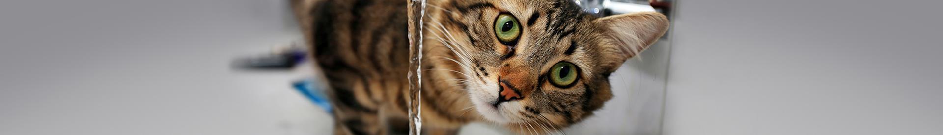 Wie Viel Sollten Katzen Trinken Whiskas