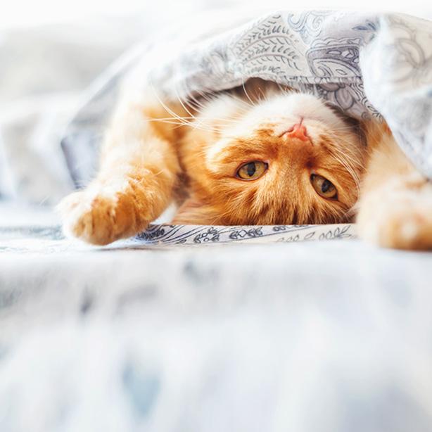 Tipps für die Anschaffung einer Katze