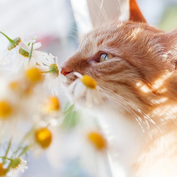 Katzen im Sommer