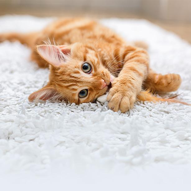 Warum Kätzchen spielen