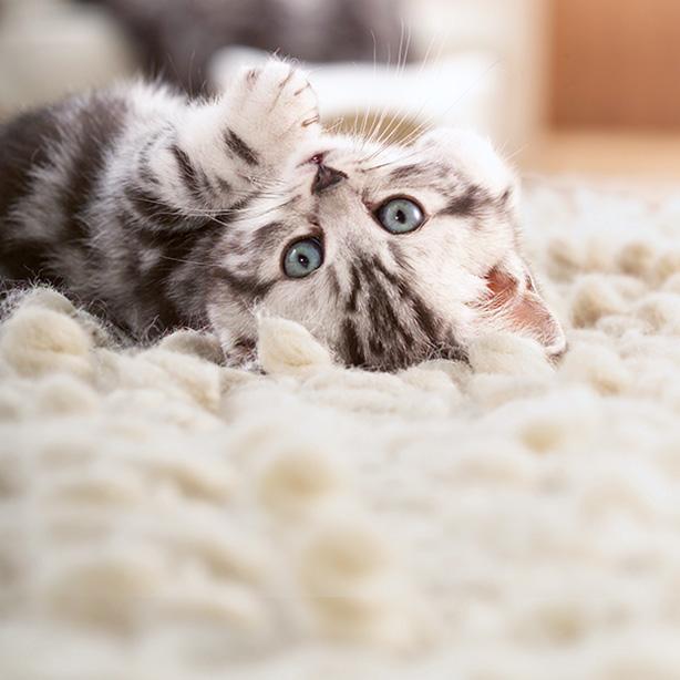 So klappt die Katzenerziehung