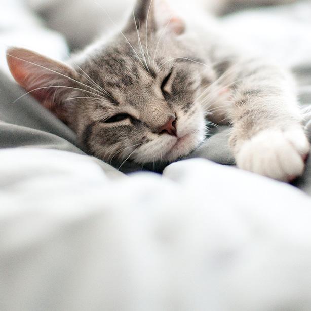 Tipps für ein langes Katzenleben