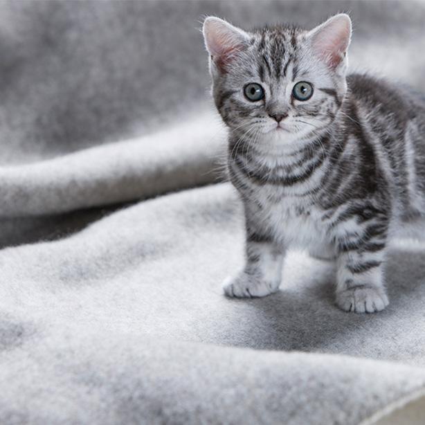 Nahrung für kleine Kätzchen