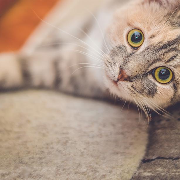 Darum sind Katzen so neugierig