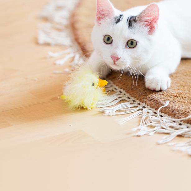 Spiel-Tipps für Ihre Katze