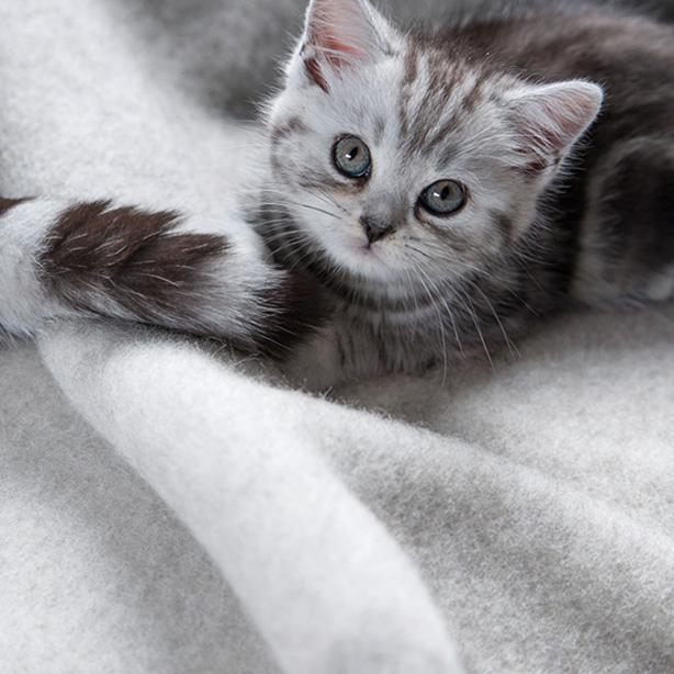 Vom Kätzchen zur Katze