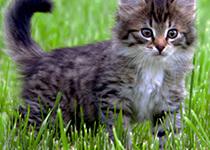 7 Tipps, Ihre Katze frühlingsfit zu machen