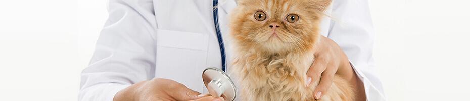 Das erste Mal zum Tierarzt