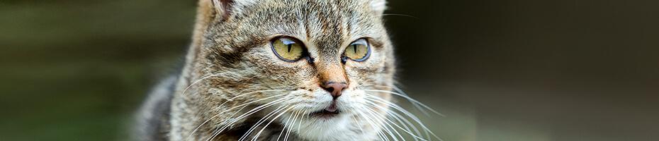 Das Fell ist der Fingerabdruck einer Katze.