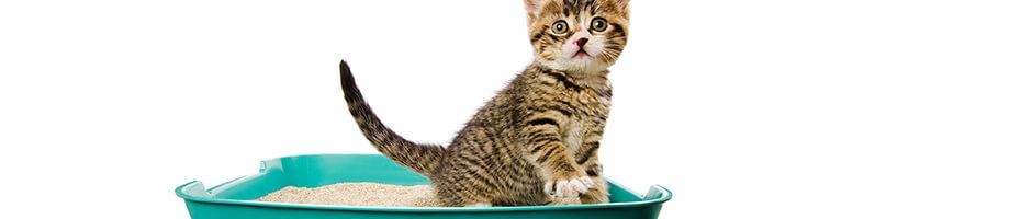 Das Katzenkisten-Training